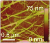 AFM topography image of printed CNT network on polyimide.