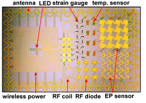Multifunctional epidermal electronic system for physiological and electrophysiological monitoring
