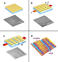Nanomechanical measurements (model system and microimage of typical specimen)