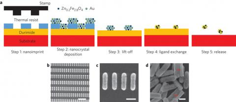 Schematic of the Zn0.2Fe2.8O4:Au hybrid nanorod fabrication process. Step 1: a Si substrate with a spin-coated bilayer of Durimide and thermal resist is imprinted with a nanorod-pillar-patterned stamp. Step 2: a mixture of Au and Zn0.2Fe2.8O4 nanocrystals is deposited by spin-coating. Step 3: resist lift-off. Step 4: ligand-exchange of the patterned nanocrystal-based nanorods with NH4SCN. Step 5: nanorod release on dissolving the Durimide layer.