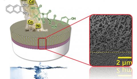 A self-assembling membrane for water purification